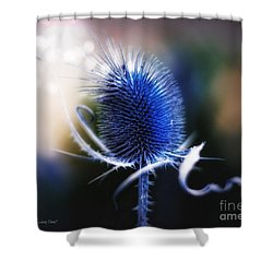 Morning Glory Shower Curtain by Mo T