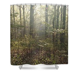 Morning Mist In The Forest Shower Curtain by Bill Cannon
