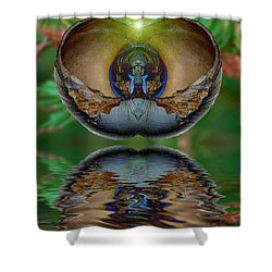 Morning Shell Shower Curtain by WB Johnston