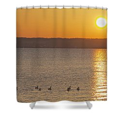 Morning Swim Shower Curtain by William Norton