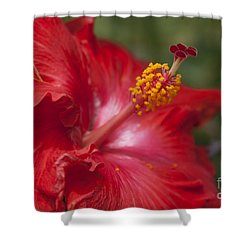 Morning Whispers Shower Curtain by Sharon Mau