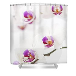 Moth Orchid Shower Curtain by Anne Gilbert
