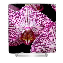 Moth Orchid Shower Curtain by James Brunker