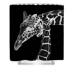 Mother And Baby Giraffe Shower Curtain by Adam Romanowicz