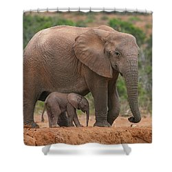 Mother And Calf Shower Curtain by Bruce J Robinson