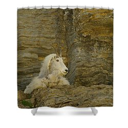 Mountain Goat Shower Curtain by Jeff Swan