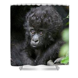 Mountain Gorilla Infant Shower Curtain by Suzi Eszterhas