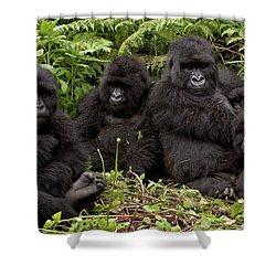 Mountain Gorilla Susa Group Shower Curtain by Ingo Arndt