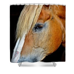 Mr Ed Shower Curtain by Frozen in Time Fine Art Photography