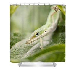 Mr Lizard Shower Curtain by Erin Johnson