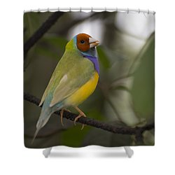 Multicolored Beauty Shower Curtain by Penny Lisowski