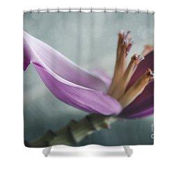 Musa Ornata - Pink Ornamental Banana Flower - Kepaniwai Maui Hawaii  Shower Curtain by Sharon Mau