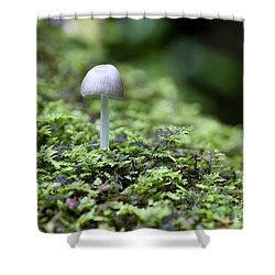Mushroom Shower Curtain by Steven Ralser