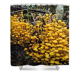 Mushrooms On Tree Trunk Panguana Nature Shower Curtain by Konrad Wothe