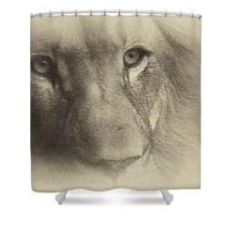My Lion Eyes In Antique Shower Curtain by Thomas Woolworth