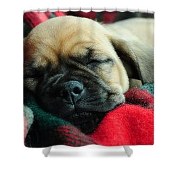Nap Time Shower Curtain by Lisa Phillips