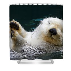 Napping On The Water Shower Curtain by Mike  Dawson