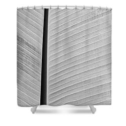 Natural Lines Shower Curtain by Sabrina L Ryan