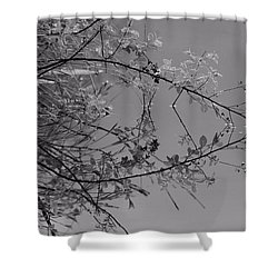 Natural Reflection Shower Curtain by Karol Livote
