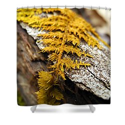 Nature's Carpet Shower Curtain by Christina Rollo