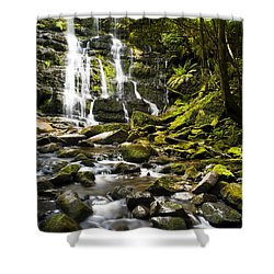 Nelson Falls Tasmania Shower Curtain by Tim Hester