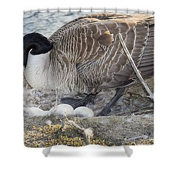 Nester Shower Curtain by Bill Pevlor