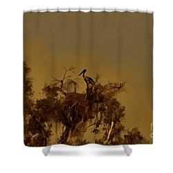 Nesting Jabiru  Shower Curtain by Douglas Barnard
