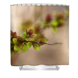 New Life Shower Curtain by Christina Rollo