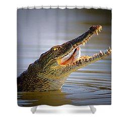 Nile Crocodile Swollowing Fish Shower Curtain by Johan Swanepoel