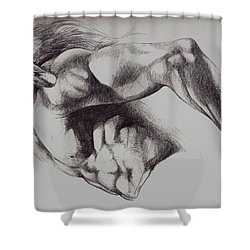 North American Minotaur Pencil Sketch Shower Curtain by Derrick Higgins