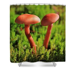 North Cascades Mushrooms Shower Curtain by Benjamin Yeager