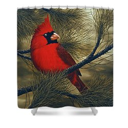 Northern Cardinal Shower Curtain by Rick Bainbridge