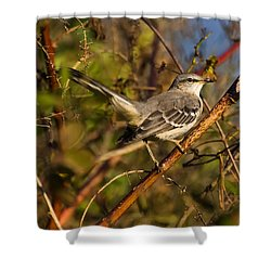 Northern Mockingbird Shower Curtain by Chris Flees