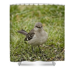 Northern Mockingbird Shower Curtain by Heather Applegate