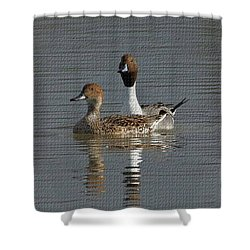 Northern Pintail Pair  Shower Curtain by Tom Janca
