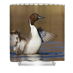 Northern Pintail Wing Flap Shower Curtain by Bryan Keil