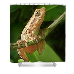 Northern Spring Peeper Shower Curtain by William Tanneberger
