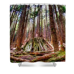 Northwest Old Growth Shower Curtain by Spencer McDonald