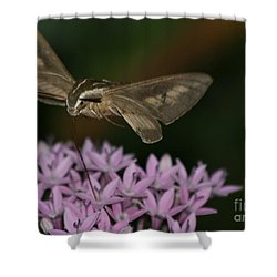 Not A Hummer Shower Curtain by Marty Fancy