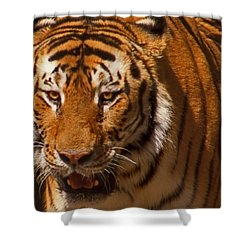 Not Happy Ears Shower Curtain by Skip Willits