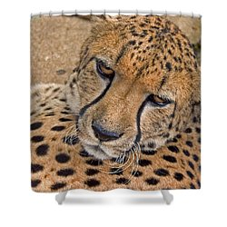 Not So Fast Shower Curtain by David Rucker