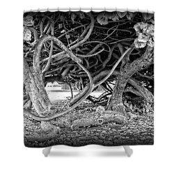 Oahu Ground Vines - Hawaii Shower Curtain by Daniel Hagerman
