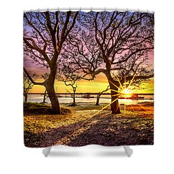 Oak Trees At Sunrise Shower Curtain by Debra and Dave Vanderlaan