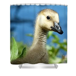 Oh Hi Shower Curtain by Jane Ford