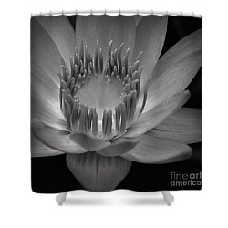 Om Mani Padme Hum Hail To The Jewel In The Lotus Shower Curtain by Sharon Mau