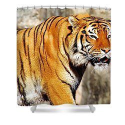 On The Prowl Shower Curtain by Jason Politte