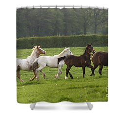 One After One Shower Curtain by Angel  Tarantella