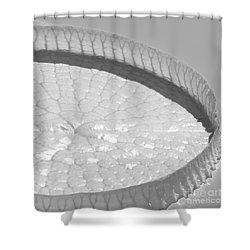 One Huge Lily Pad #3b Shower Curtain by Sabrina L Ryan