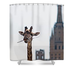 One More Bite To Outgrow The Tallest 3 - Featured 3 Shower Curtain by Alexander Senin