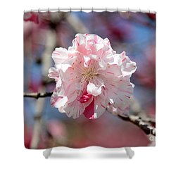 One Pink Blossom Shower Curtain by Carol Groenen